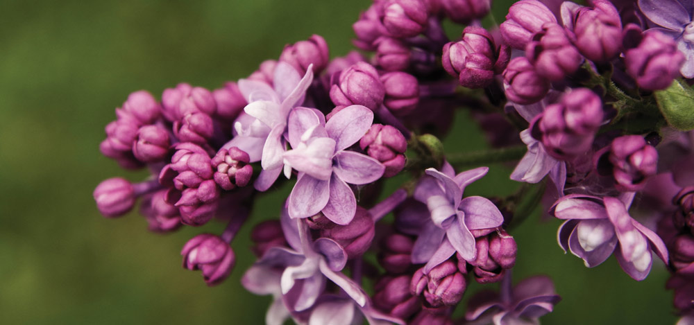 blooming-blossom-bright-1116945featured-image