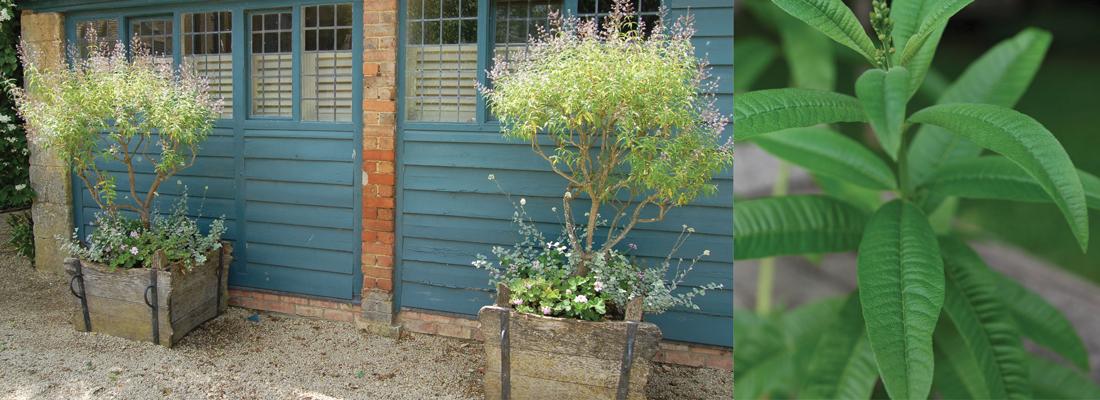 julyaugust_gardencolumn_1100x400pxweb